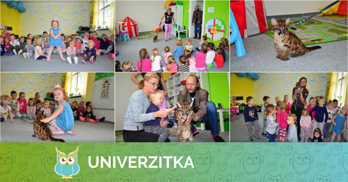 Puma z cirkusu JOJOO v Univerzitce