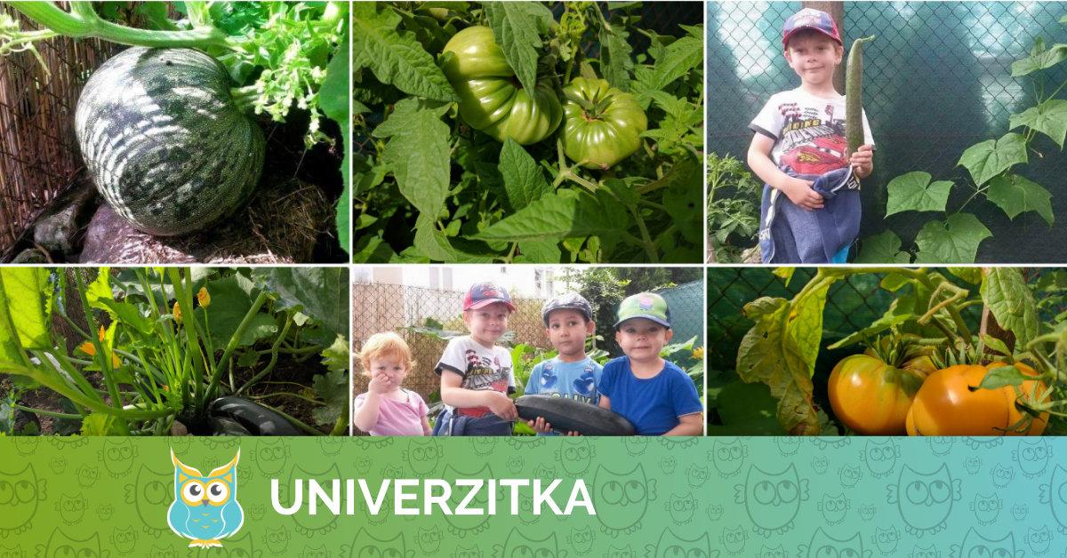 Zeleninová úroda v Univerzitce